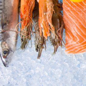 fornitore ittico bari bat